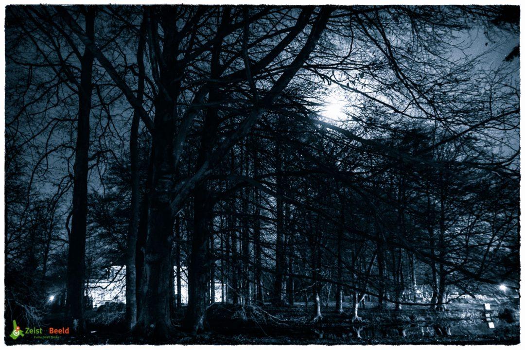 Sinterklaas - Zie De Maan Schijnt Door De Bomen